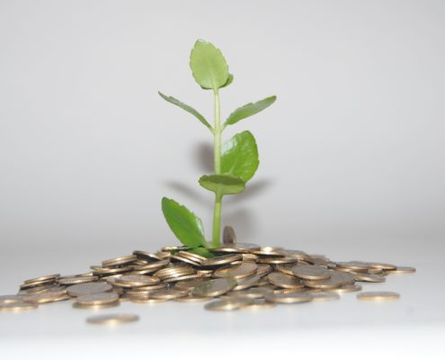 Green sprout growing from coins on white background